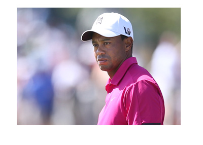 The famous golfer Tiger Woods in a purple shirt, evaluating his next shot.