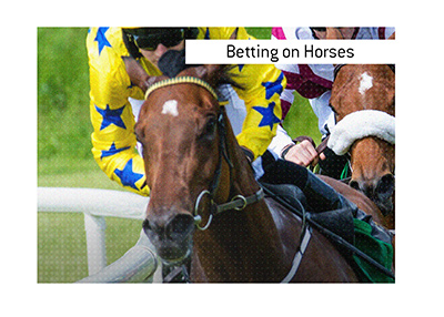 Bet on horse races.  It is one of the most exhilarating sports to place wagers on.  The Sport of Kings, some call it.